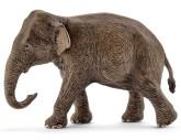 Scheich Asiatisk elefanthona